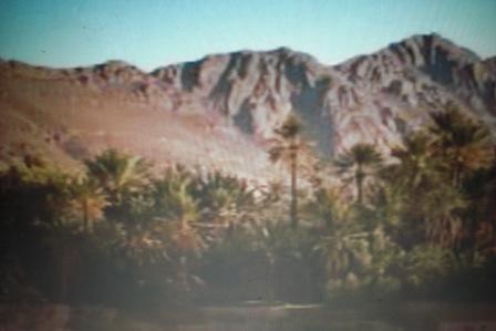 oasis1.JPG
